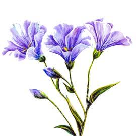 Création de fleurs en papier crépon