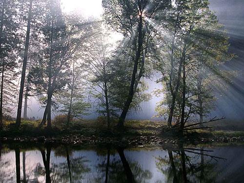 paysage_foret.jpg