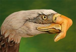 vautour_petit.jpg