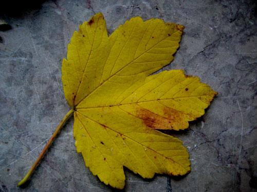 pour ramasser les feuilles mortes mesure qu elles tombent et les pictures to pin on pinterest. Black Bedroom Furniture Sets. Home Design Ideas