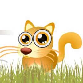chat-au-gros-yeux