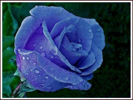 avec la candeur le bleu de la fleur